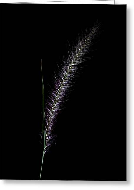Fountain Grass Spike Greeting Card by Richard Stephen