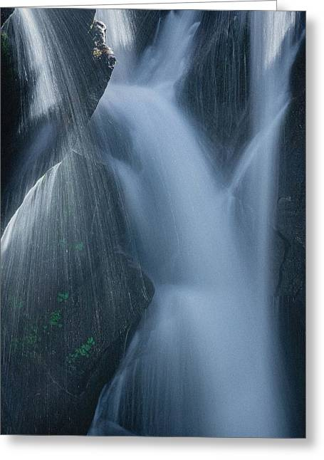 Fountain Nature Greeting Card