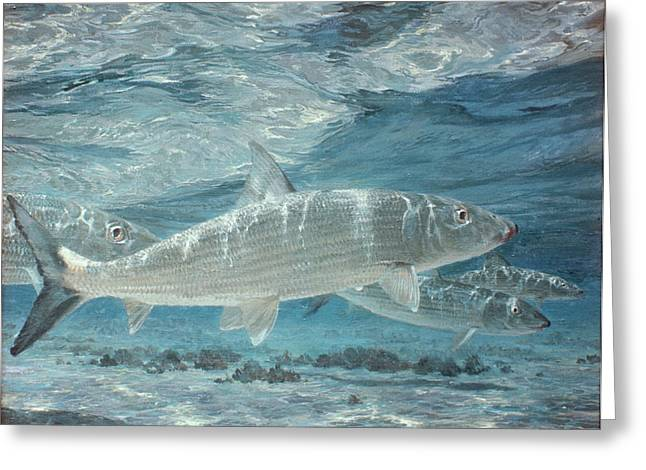 Four Bonefish Up With The Tide, 1972 Greeting Card