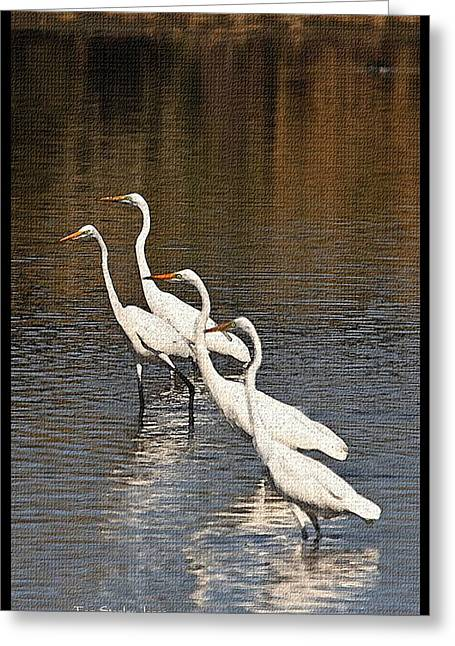 Greeting Card featuring the photograph Four Egrets Fishing by Tom Janca
