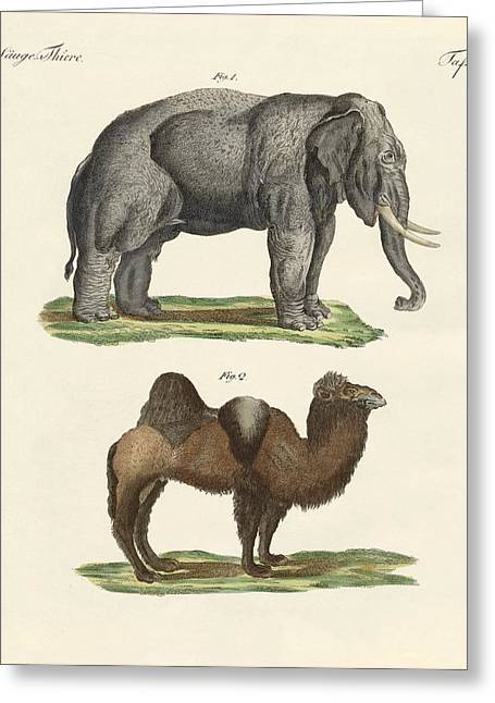 Four-footed Animals Greeting Card by Friedrich Justin Bertuch