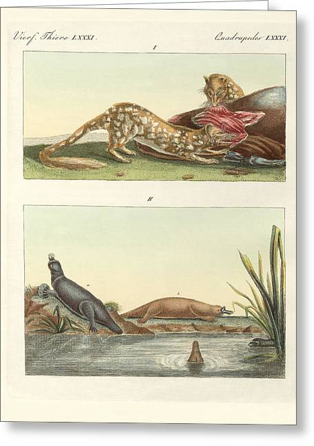 Four-footed Animals Of Australia Greeting Card by Splendid Art Prints