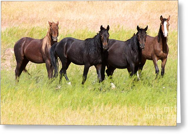 Greeting Card featuring the photograph Four Friends by Vinnie Oakes