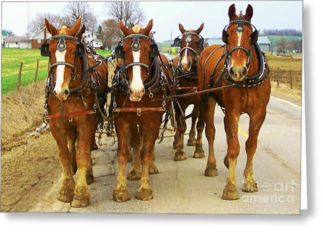 Four Horse Power Greeting Card by B Wayne Mullins