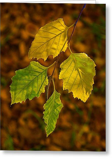 Four Leaves In Light Greeting Card by Viktor Savchenko