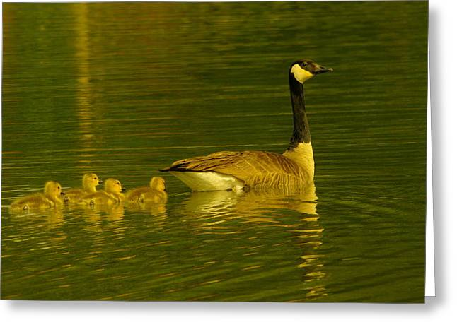Four Little Miracles Greeting Card by Jeff Swan