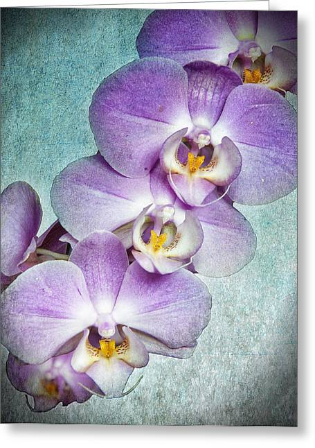 Four Little Orchids Greeting Card
