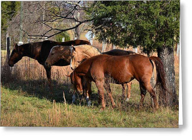 Four Pals - 51008424c Greeting Card by Paul Lyndon Phillips