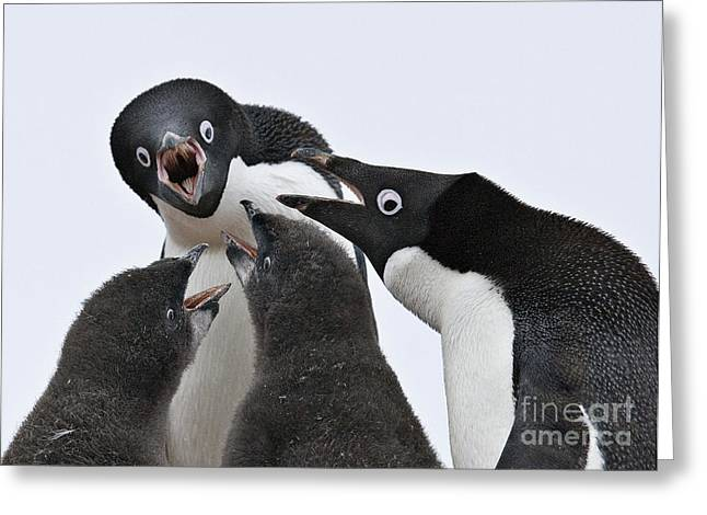 Four Penguins Greeting Card by Carol Walker