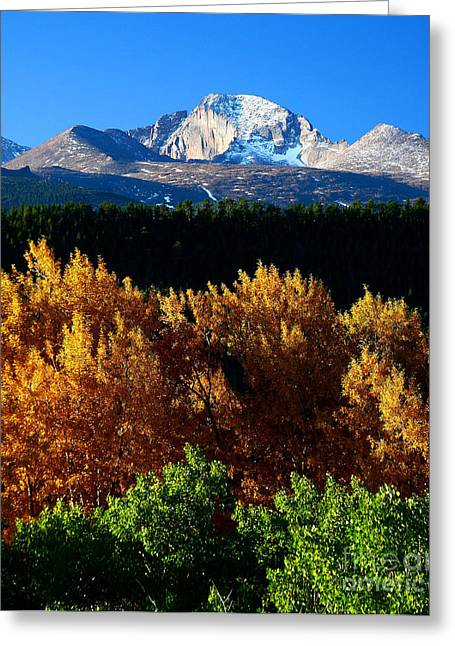 Greeting Card featuring the photograph Four Seasons by Steven Reed