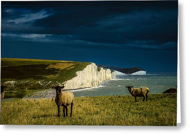 Four Sheep And Seven Sisters Greeting Card by Chris Lord