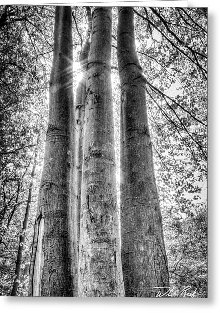 Four Trunks Greeting Card by William Reek