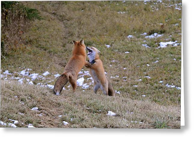 Fox Dance Greeting Card by Sandra Updyke