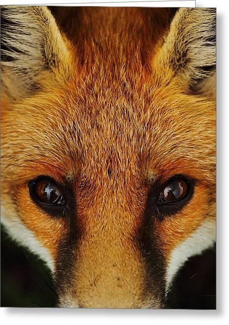 Fox Eyes Greeting Card by Victoria Hillman