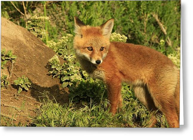 Fox Kit Greeting Card