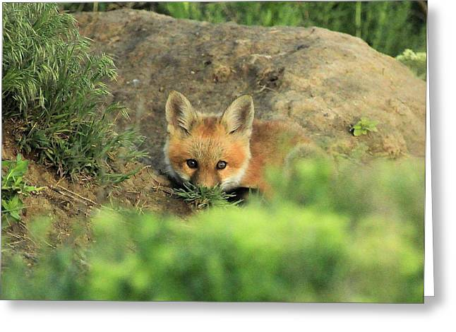 Fox Kit V Greeting Card