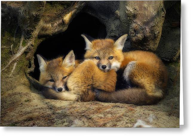 Best Friends - Fox Kits At Rest Greeting Card