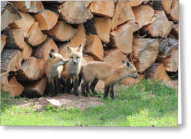 Fox Kits Greeting Card