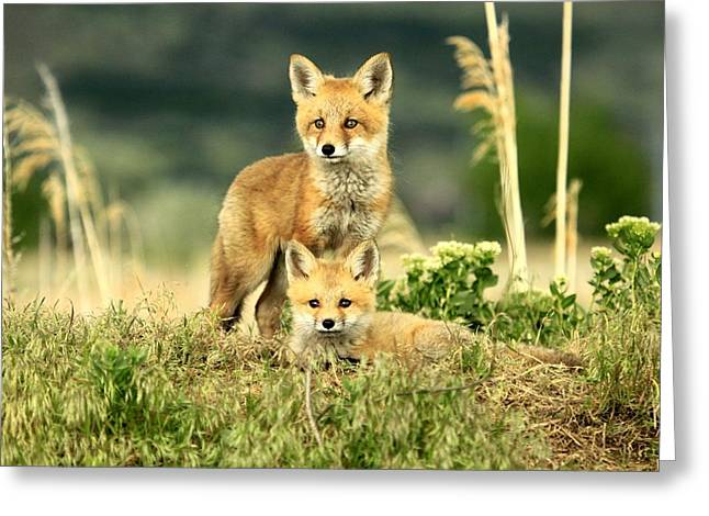 Fox Kits II Greeting Card