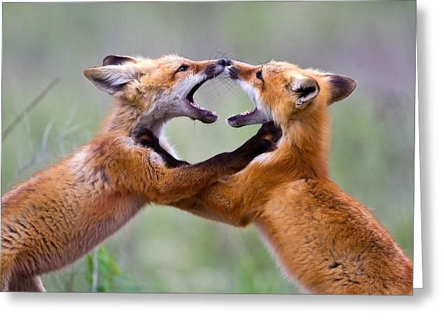 Fox Kits Greeting Card by Merle Ann Loman