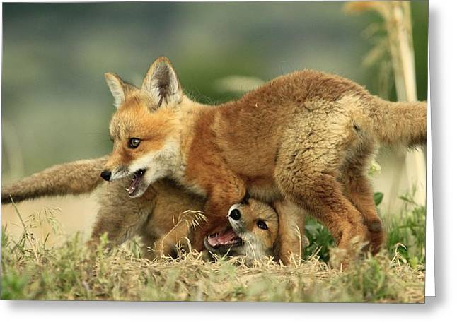 Fox Kits Greeting Card
