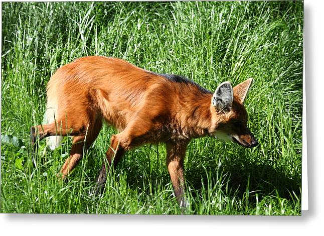 Fox - National Zoo - 01137 Greeting Card by DC Photographer