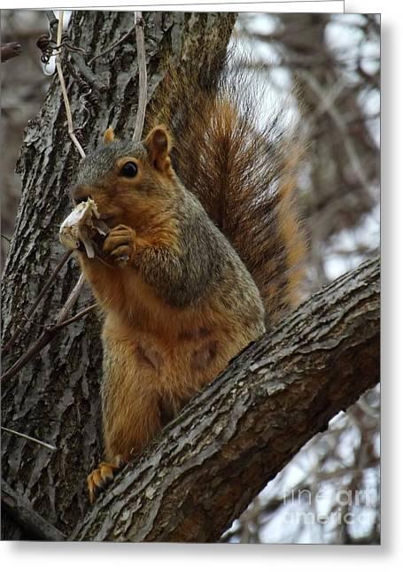 Fox Squirrel Eating Breakfast Greeting Card