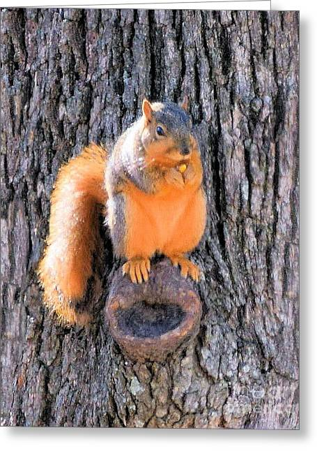 Fox Squirrel On Bur Oak Tree Greeting Card by Janette Boyd