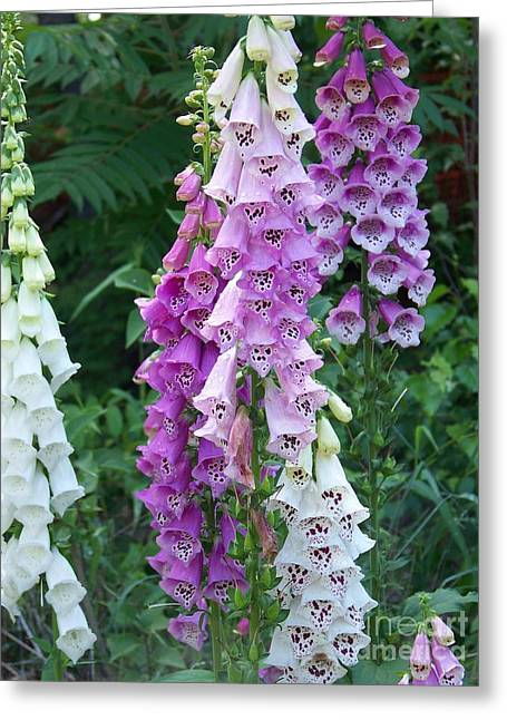 Foxglove After The Rains Greeting Card by Eunice Miller