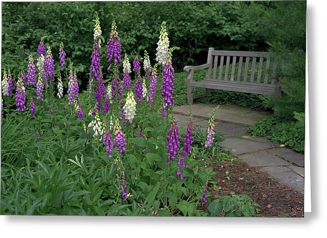Foxglove Garden Path With Bench Greeting Card by Anna Miller