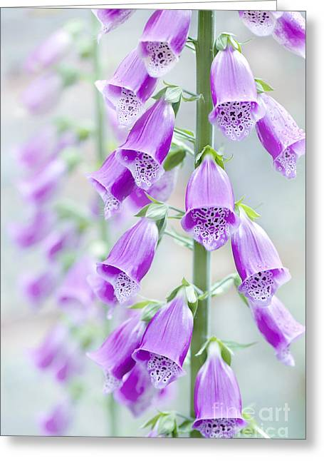 Foxglove Greeting Card by Jacky Parker