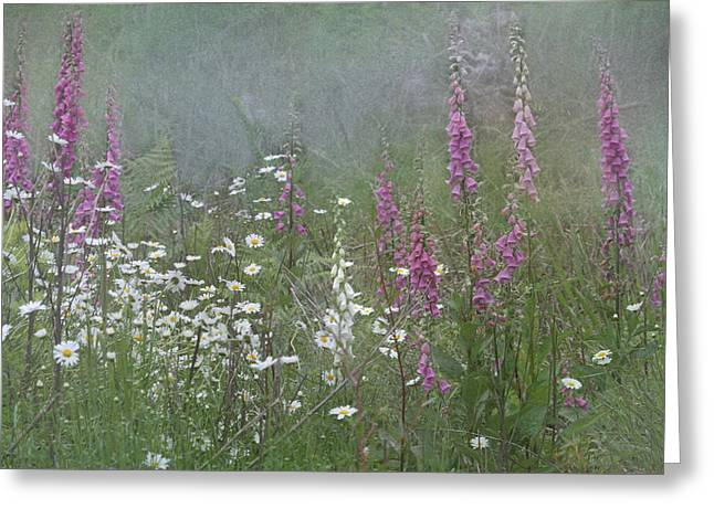 Foxgloves And Daisies Greeting Card