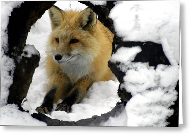 Foxy View Greeting Card by Teresa Schomig