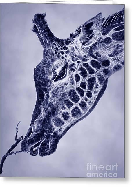 Fractal Giraffe Duotone Greeting Card
