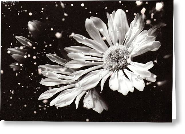 Fractured Daisy Greeting Card