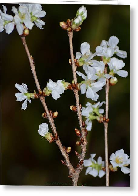 Fragrance Of  Spring Greeting Card