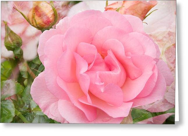 Fragrant Cloud Rose Greeting Card by Jane McIlroy