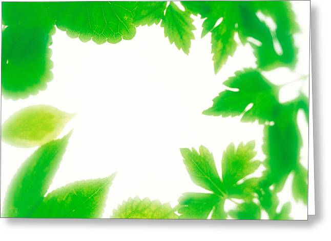 Frame Of Fresh Green Leaves On Shiny Greeting Card