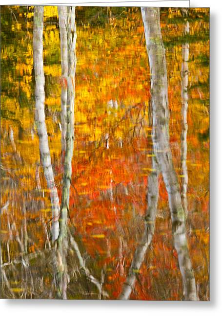 Framed Fire Birches And Foliage Reflection Greeting Card by Jeff Sinon