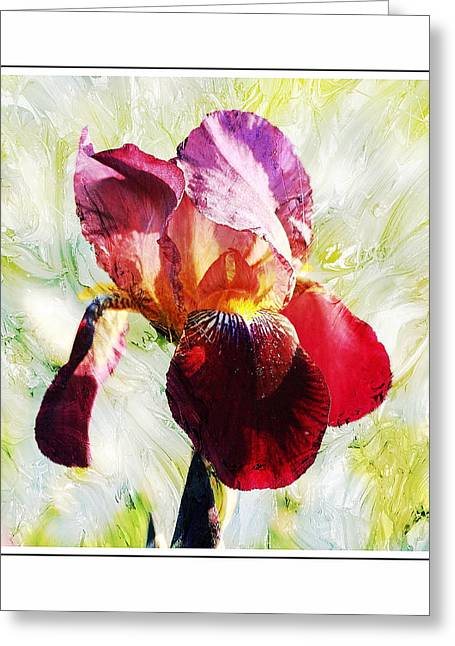 Framed Iris Greeting Card