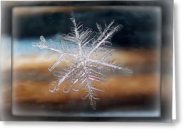 Framed Snowflake Greeting Card by Lorella  Schoales