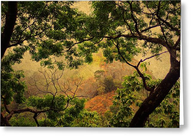 Framing Tree Branches Greeting Card by Jenny Rainbow