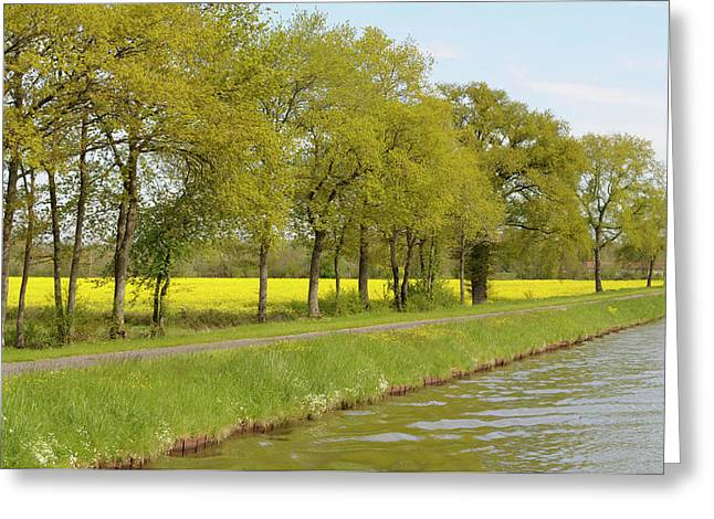 France, Loire Trees And Mustard Fields Greeting Card