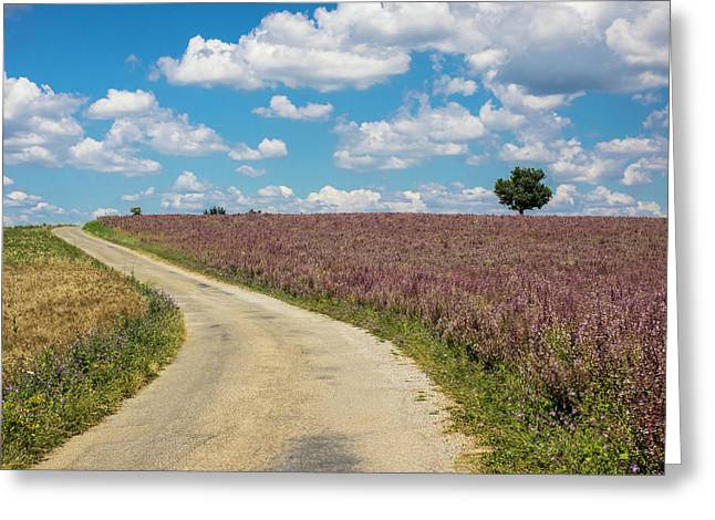 France, Provence, Country Backroad Greeting Card by Terry Eggers