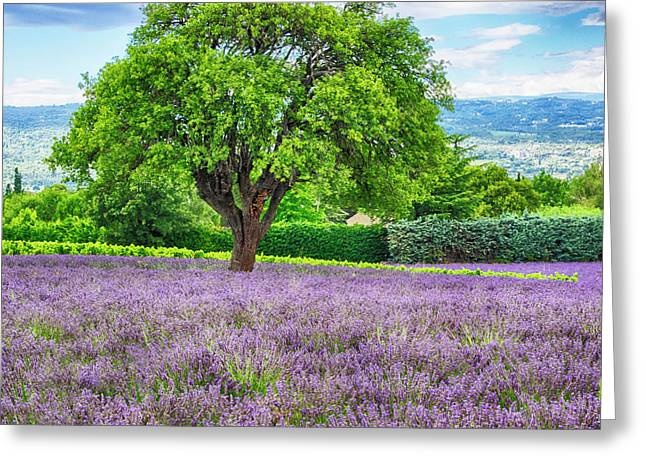France, Provence, Lone Tree In Lavender Greeting Card by Terry Eggers