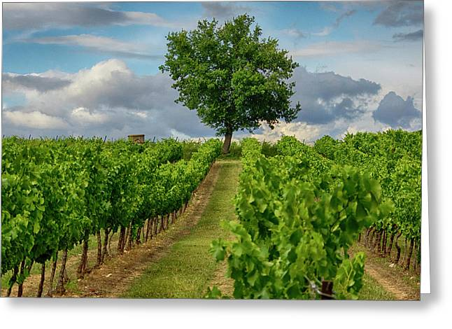 France, Provence, Lone Tree In Vineyard Greeting Card by Terry Eggers