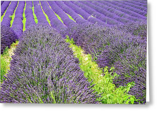 France, Provence, Patterns Greeting Card by Terry Eggers