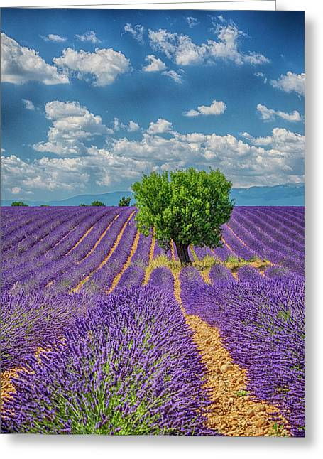 France, Provence, Valensole, Lone Tree Greeting Card by Terry Eggers