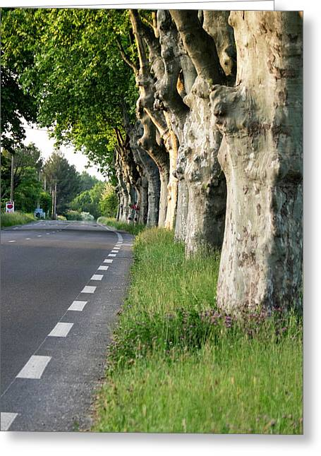 France, St Remy, Rural Road Greeting Card by Emily Wilson