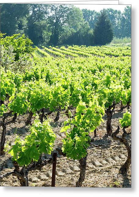 France, St Remy, Vineyards Luberon Greeting Card by Emily Wilson